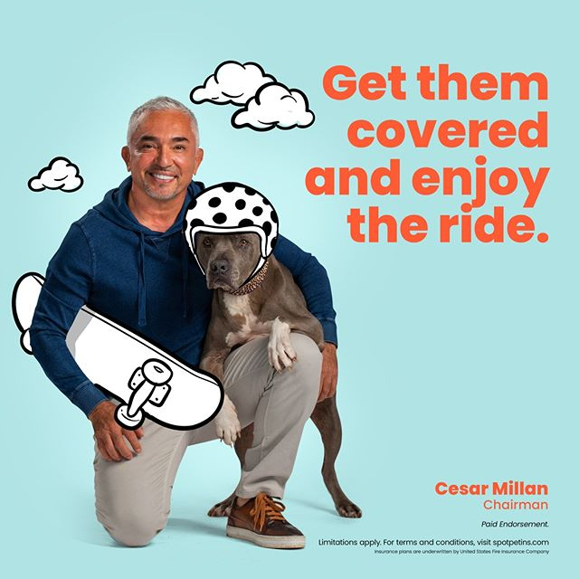 Featured today - Spot Pet Insurance